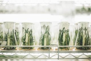 Growing of plants in a laboratory
