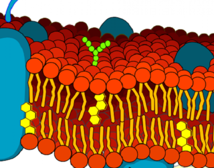 Artist impression of a cell membrane