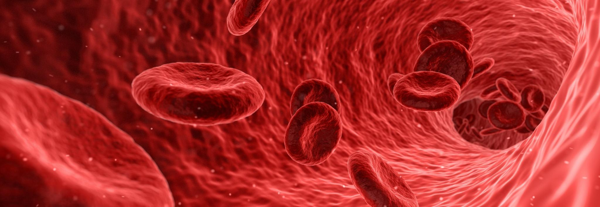 Artist impression of red blood cells in a blood vessel